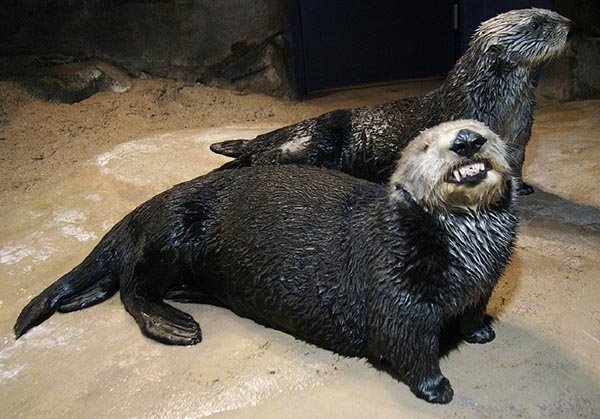 I Know You're Smiling for the Camera, Otter, But It's a Little... Unsettling