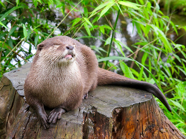 Otter Soaks Up the Sunlight