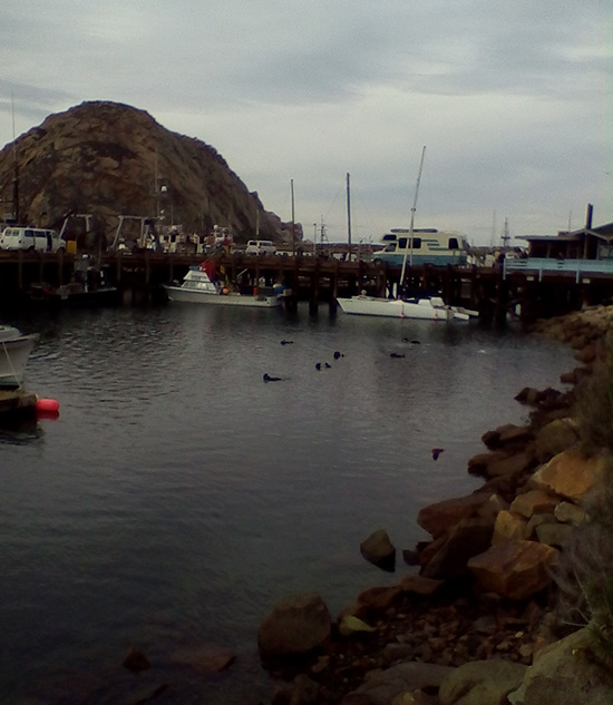 Sea Otter Raft Floats into the Harbor 2