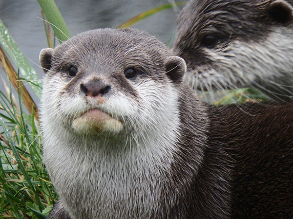 Otter Has Seen Some Things