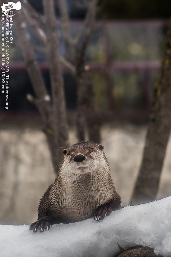 Otter Looks So Pleased