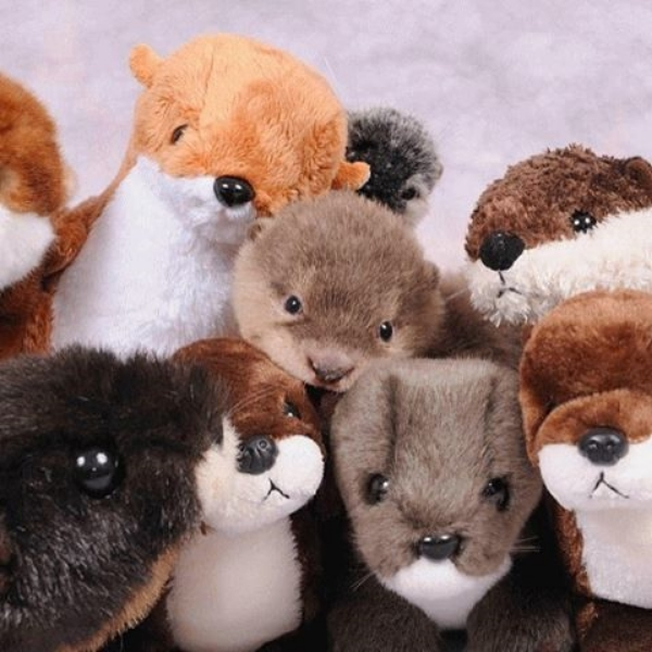 Popular Otter Pup Has So Many Stuffed Friends