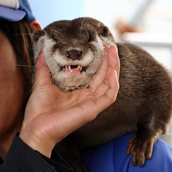 The Many Smooshed Faces of Otter 2