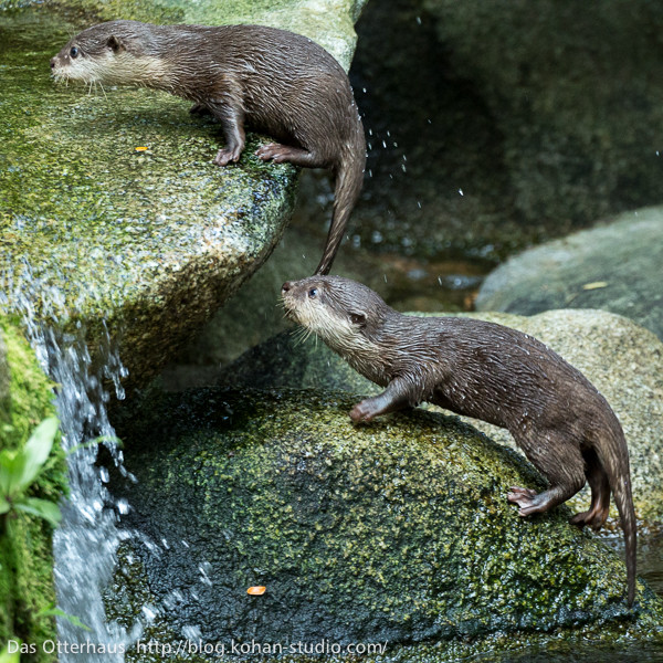 Come On, Hop on Up, Little Otter
