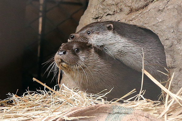Impatient Otter Just Can't Wait for Her Friend to Move Out of the Way