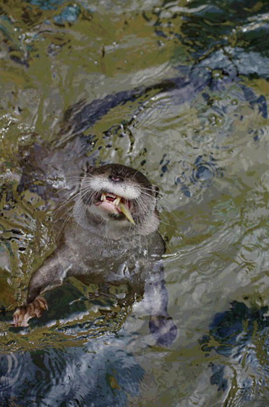 Otter Delights in a Fresh Catch