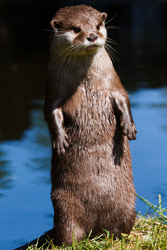Otter Does Not Like the Looks of Something