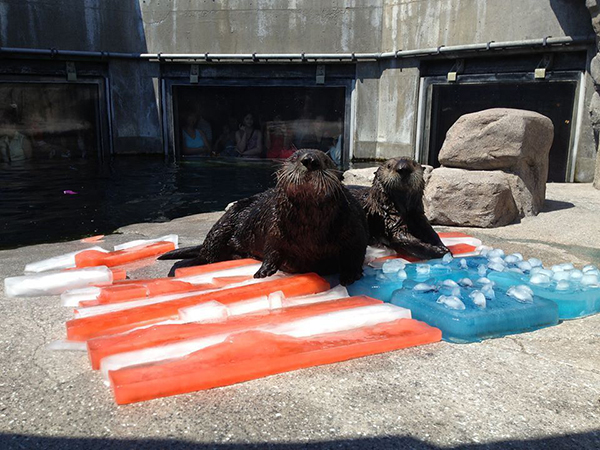 Sea Otters Wish Their American Friends a Happy Independence Day