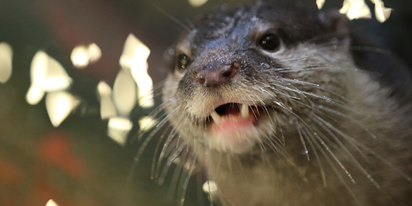Otter Is Mesmerized