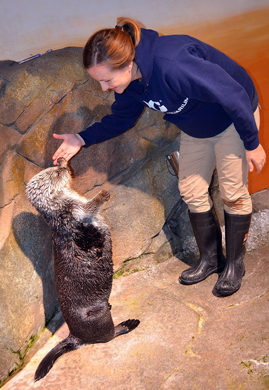 Lucky Human Gets a High-Five from Sea Otter