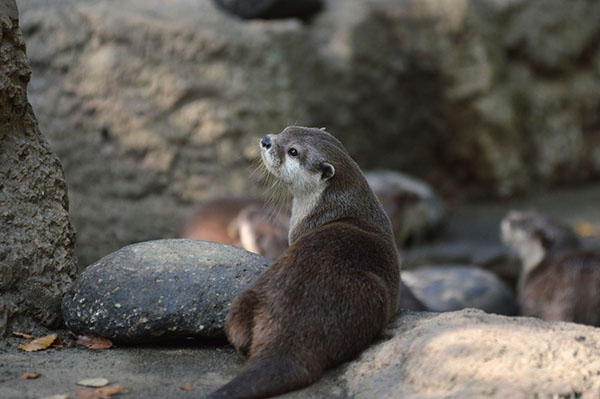 "Model Otter Perfects Her ""Wistfully-Gazing-Over-the-Shoulder"" Pose"