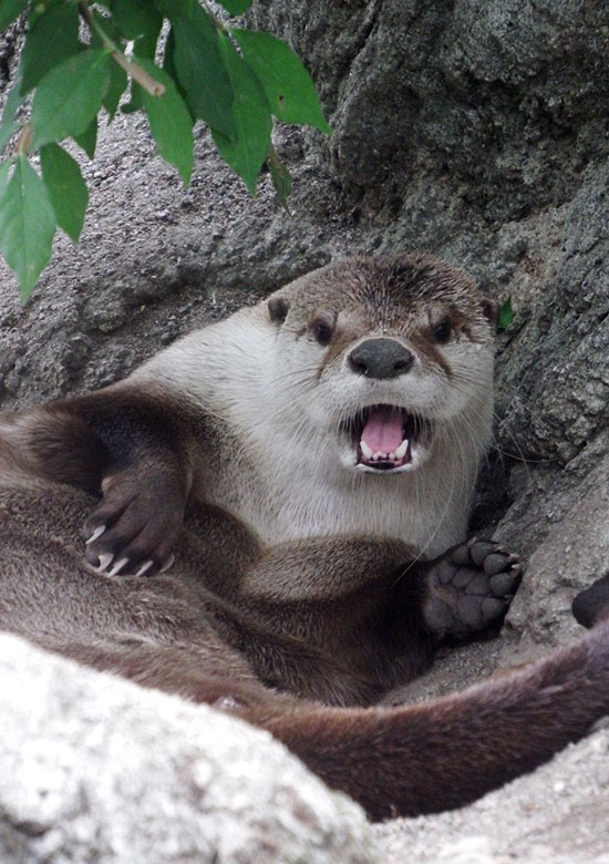 Otter Has Noticed the Paparazzi