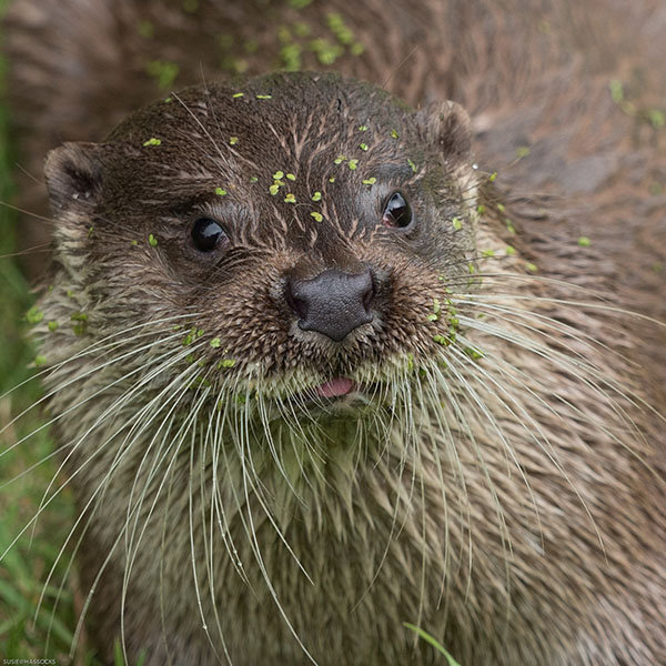 You Have Something on Your Face, Otter
