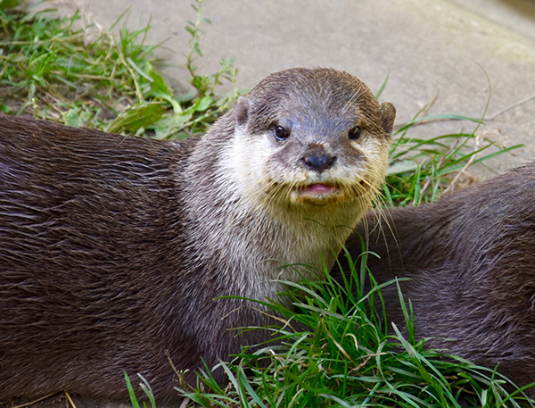 Otter, Such Long Whiskers You Have!