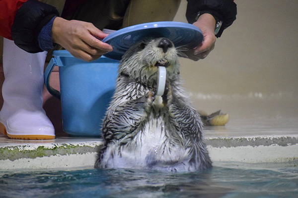 What a Nice Hat, Otter! 1