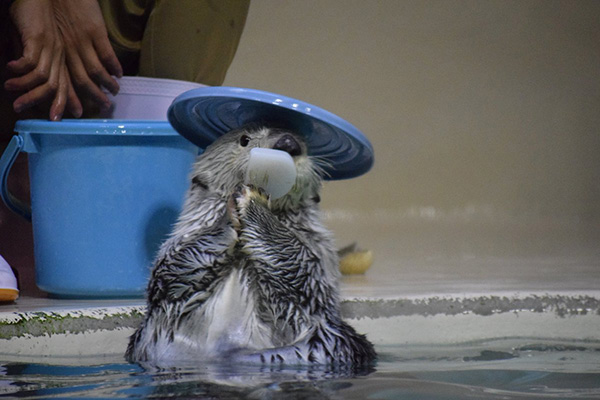 What a Nice Hat, Otter! 2