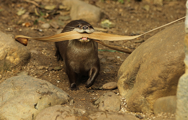 Where Are You Going with All That Stuff, Otter? 1