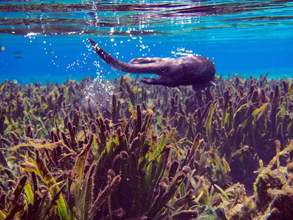Otter Explores an Underwater Garden