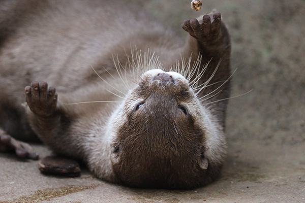 Otter Plays Solo Catch
