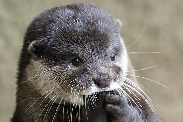 Otter Is in Suspense!