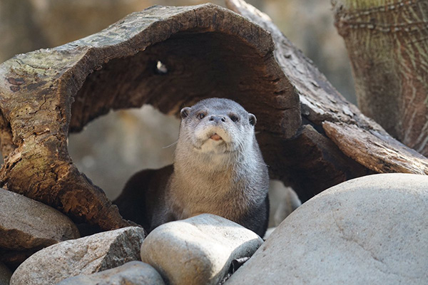 Otter Doesn't Exactly Look Thrilled to Be Up This Morning