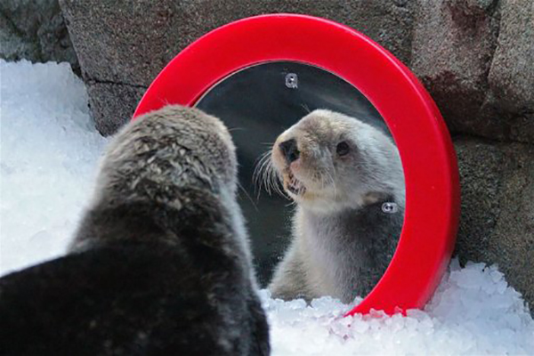 Mirror, Mirror on the Wall, Who's the Fairest Otter of All?