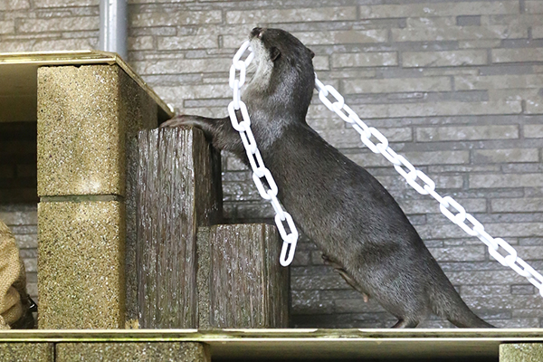 That's the Sound of the Otters Working on the Chain Gang 1