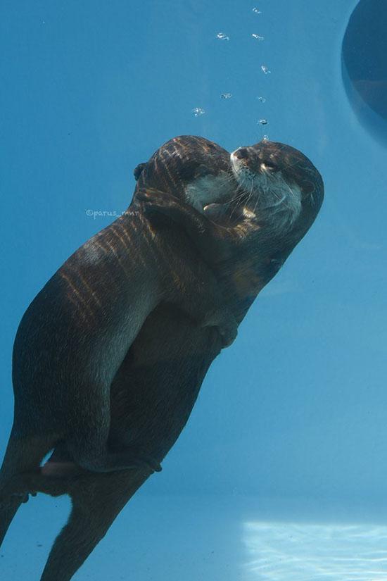 Underwater Hugs! 1