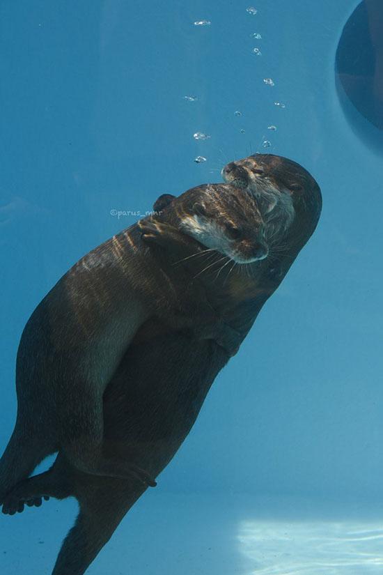 Underwater Hugs! 2