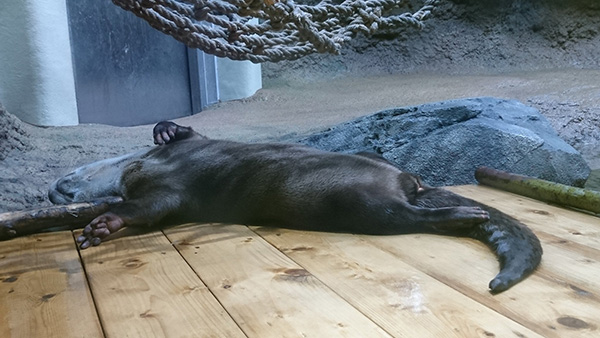 Otter Cannot, He Just Can. Not.