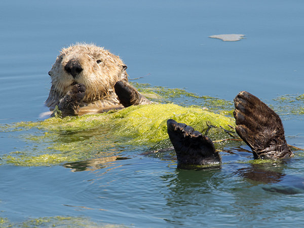 This Algae Makes a Nice Blanket, Don't You Think?