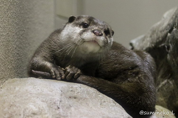 Right Now, Otter Is Thankful for Her Tail