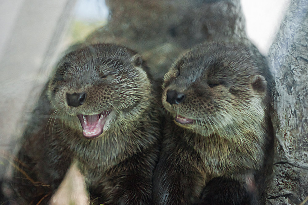 Otter Doesn't Find His Brother's Joke Very Funny