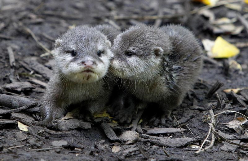 Newborn Otters Get Olympic Names