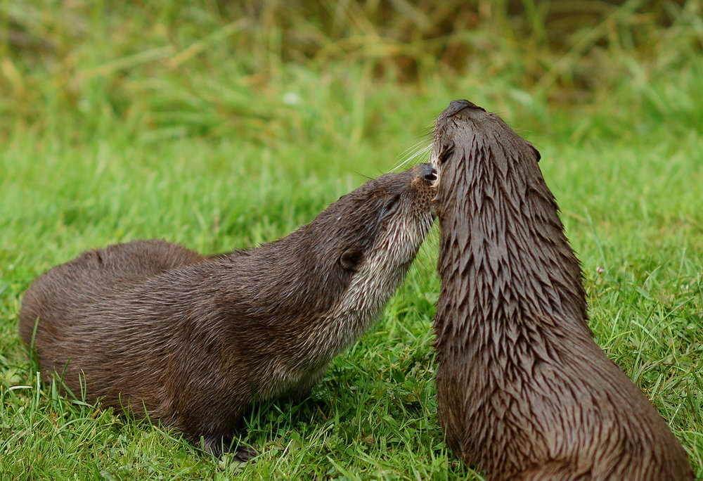 How About a Kiss on the Cheek?