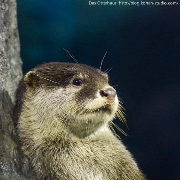Nonchalant Otter Leans Against a Tree