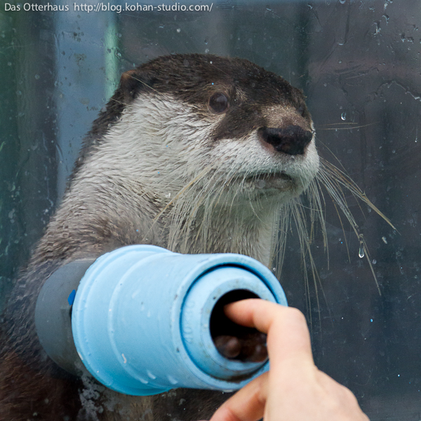 Otter and Hoomin Touch Paws