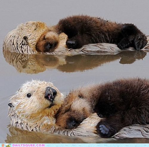 Otter Pup Rests on a Wotterbed