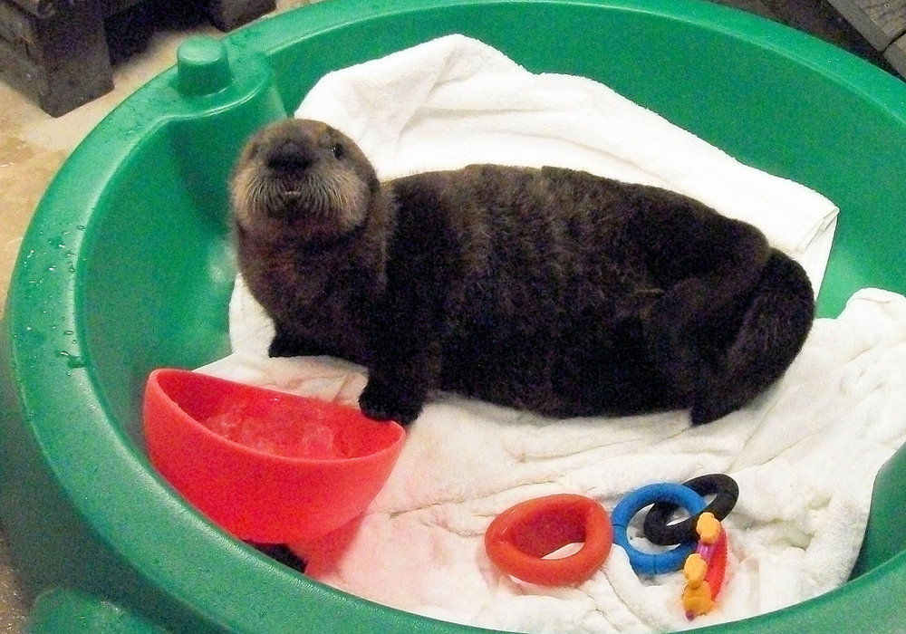 Sea Otter Pup Has a Space All to Herself