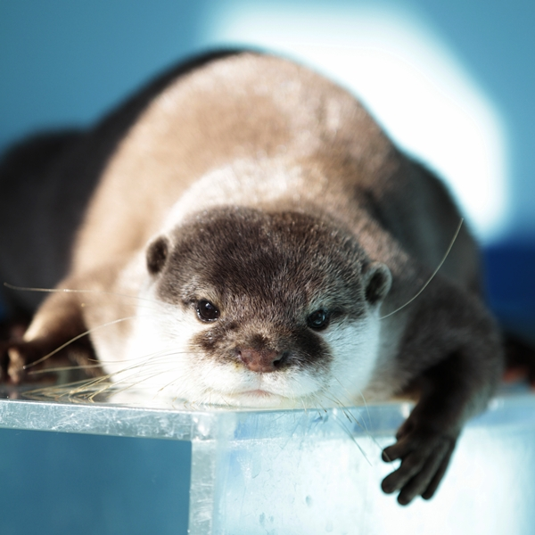 Otter Looks Content