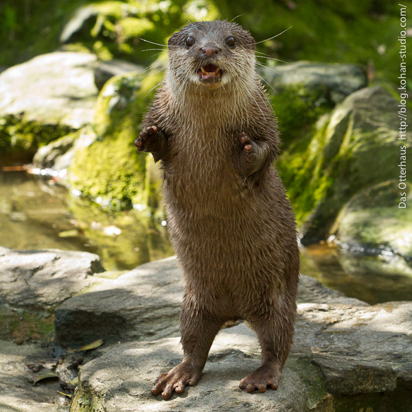 "Otter Says ""Boo! Did I Scare You?"" 1"