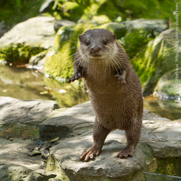 "Otter Says ""Boo! Did I Scare You?"" 2"