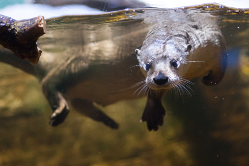 Otter Does a Water Dance