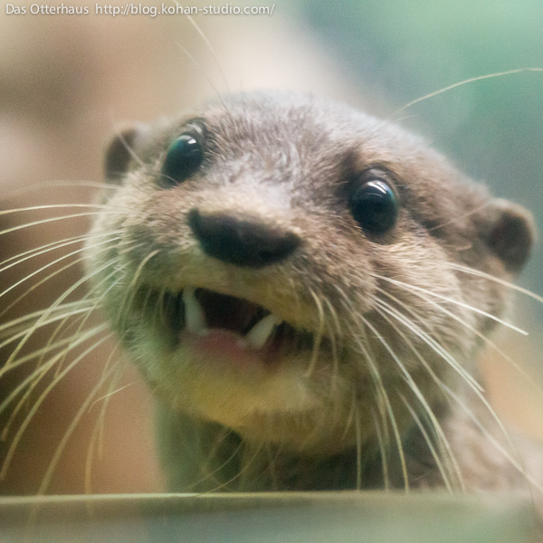 Otter Has a Goofy Smile