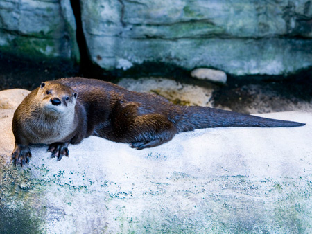River Otter Rio Is 20 Years Old!