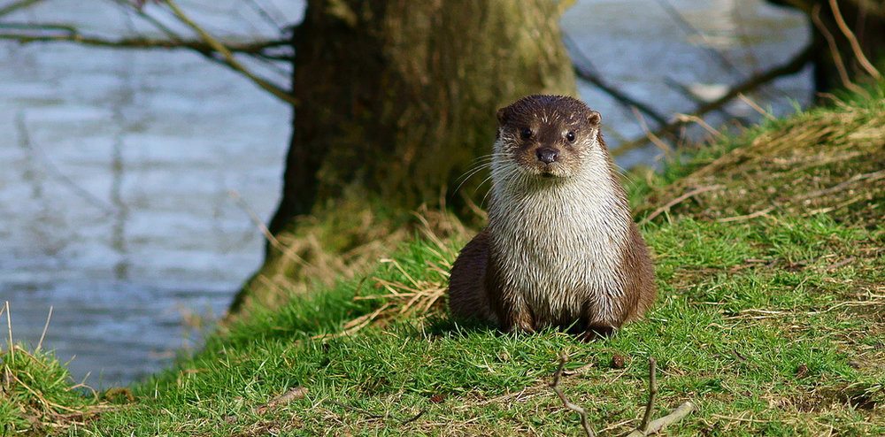 Otter Looks Right at You