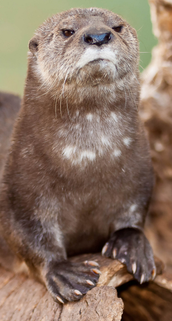 Otter Is Disappoint