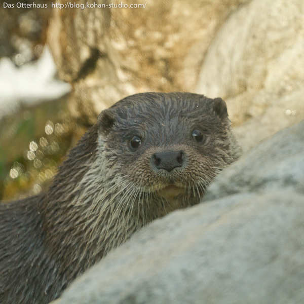 Otter Is Happy to See You Though It Takes a Moment to Recognize You 1