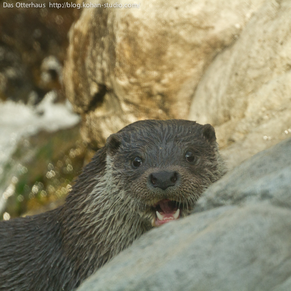 Otter Is Happy to See You Though It Takes a Moment to Recognize You 2