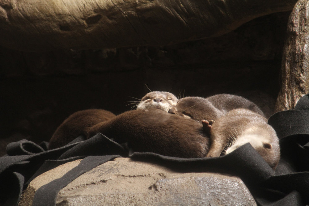 Nothing More Relaxing than a Nap with Friends in the Sunlight